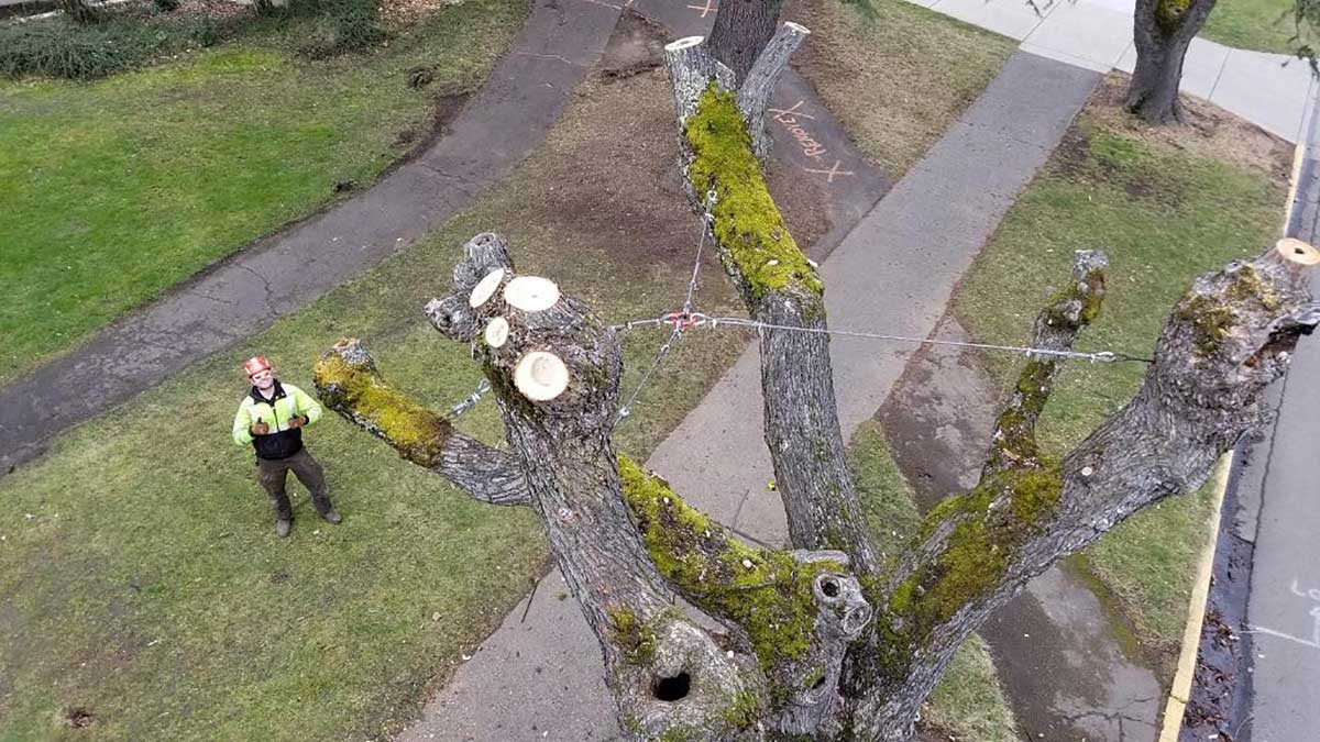 SOU Habitat Trees aka Snags are Snagging Campus Attention